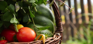 Im Beet lassen sich zahlreiche Obst- & Gemüsesorten anbauen